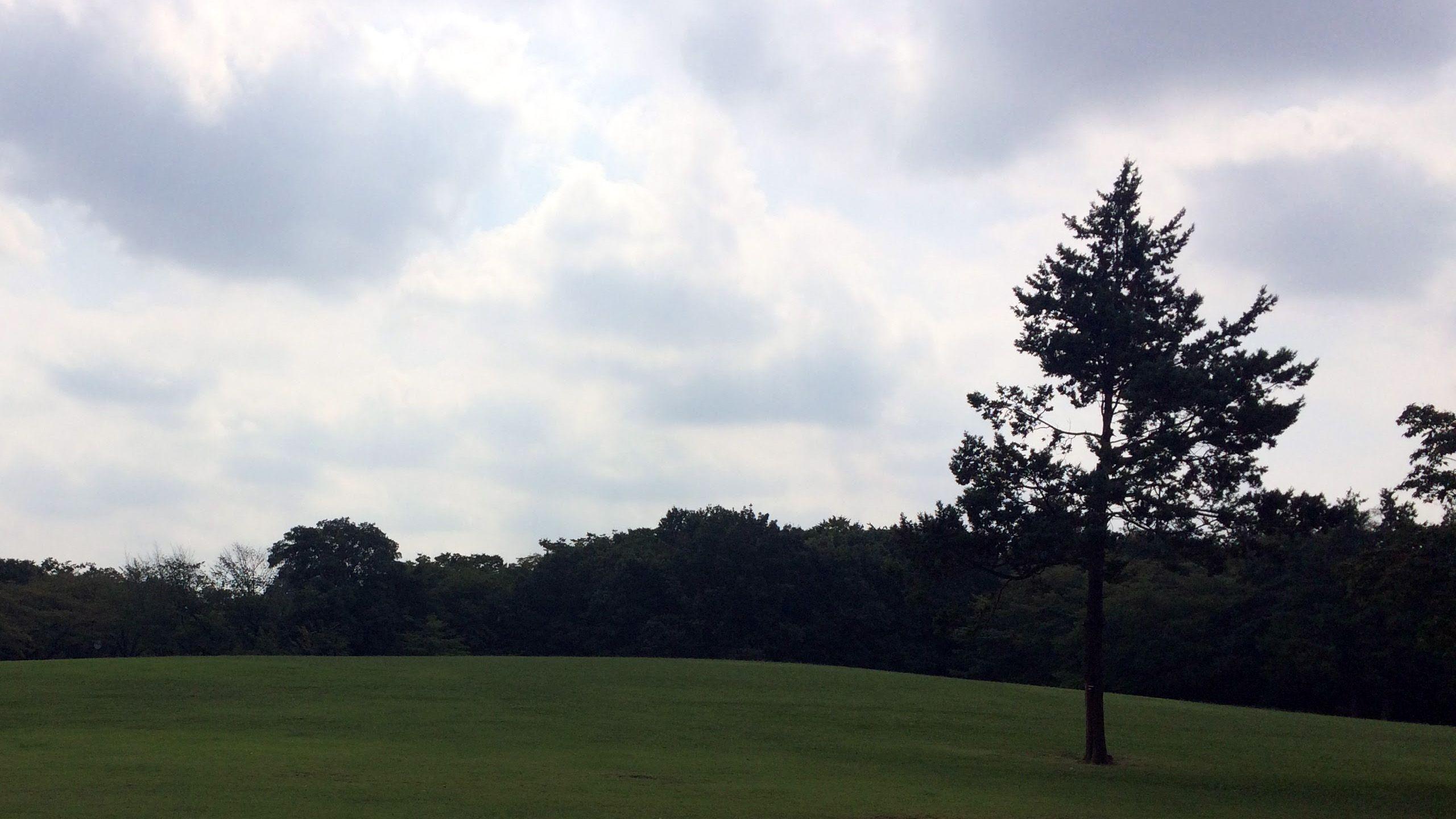 芝生の広場は平らな木陰からゆるやかな丘につながる